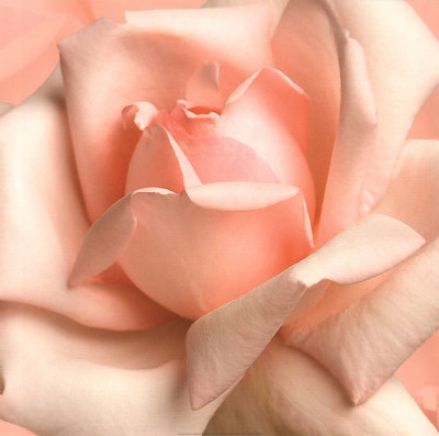 4019rosa-rosa-ai-raggi-x-posters